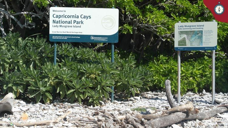 la gran barrera de coral lady musgrave 2