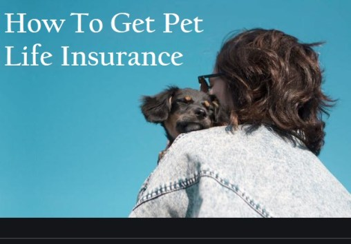 How To Get Pet Life Insurance - All You Need to Know About Pet Insurance