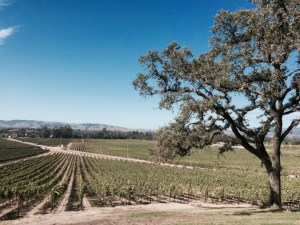 California Trip Part 2: Wine Tasting
