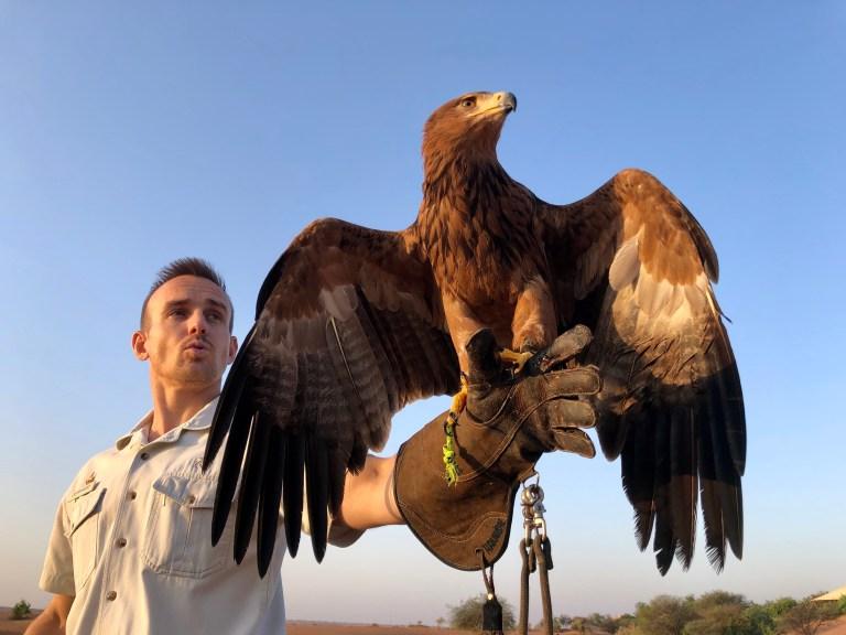 Al Maha Falconry