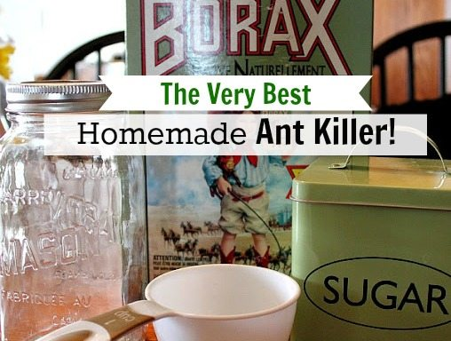 Ant Control In Kitchen Beautiful Natural Repellent For Indoors The Best 2018