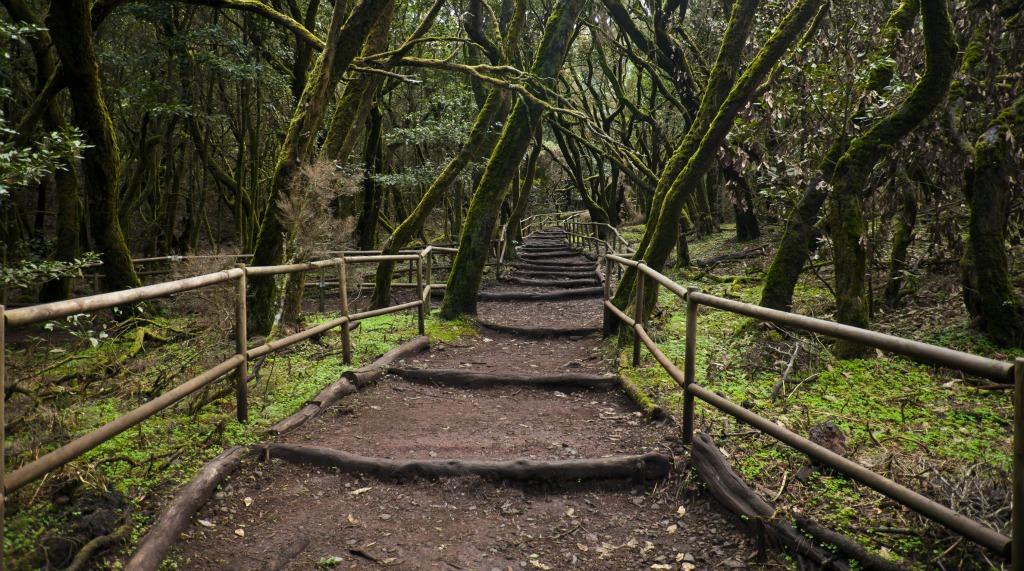 Bosque_Encantado_Parque_nacional_de_Garajonay_La_Gomera_España,_2012-12-14_DD_19