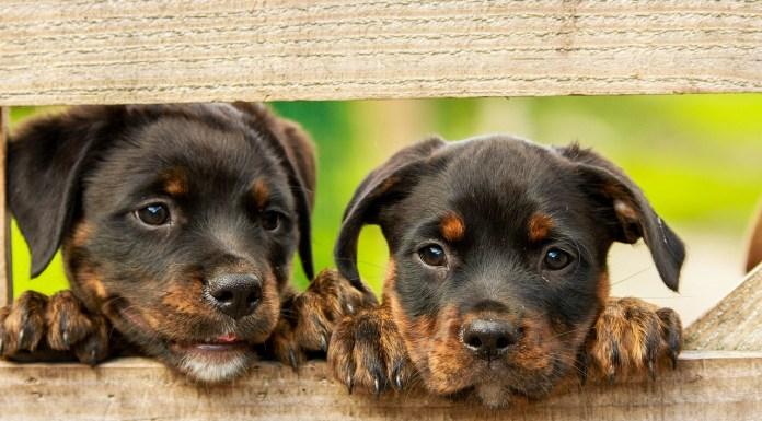 Cani, foto generica da Pixabay