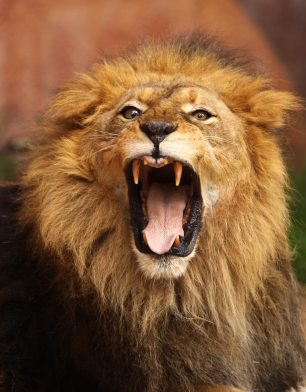 The real estate market is roaring back!
