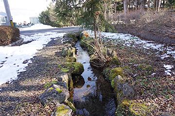 ↑清水池から流れる小川。