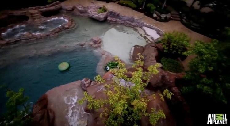 the-ultimate-backyard-escape-the-2