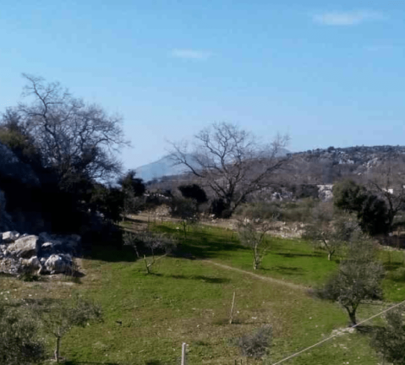 Plot with olive groves and industrial building, near to Anogia