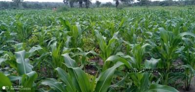 A la ferme de Creuset Togo