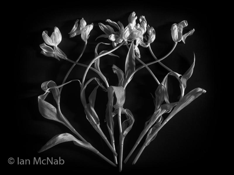 Ian McNab – 1_Arabesque_M_45-2
