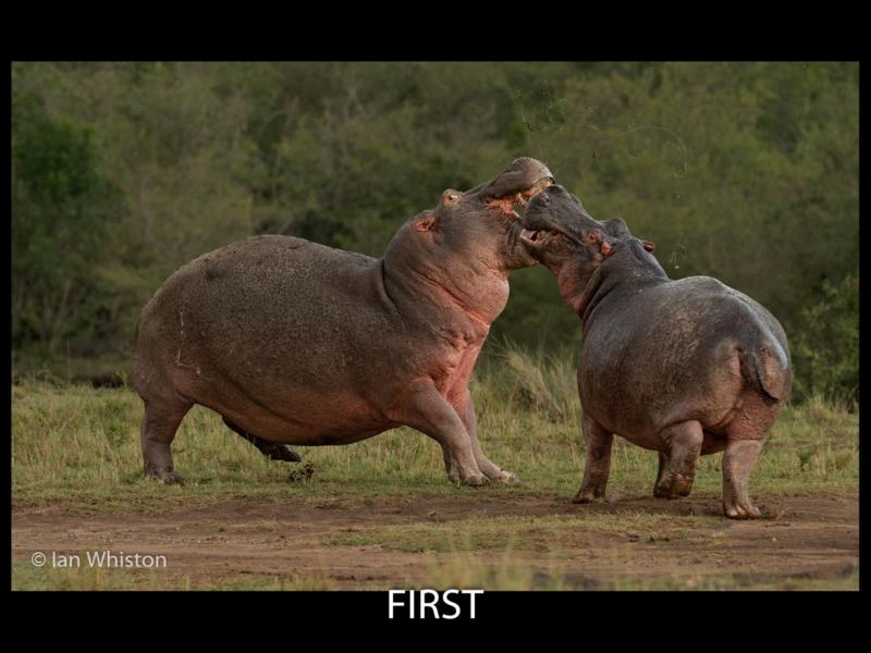 Ian Whiston – 01_Hippo Dispute_N_26-2-2