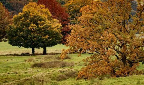 Autumn colours at Tatton Park