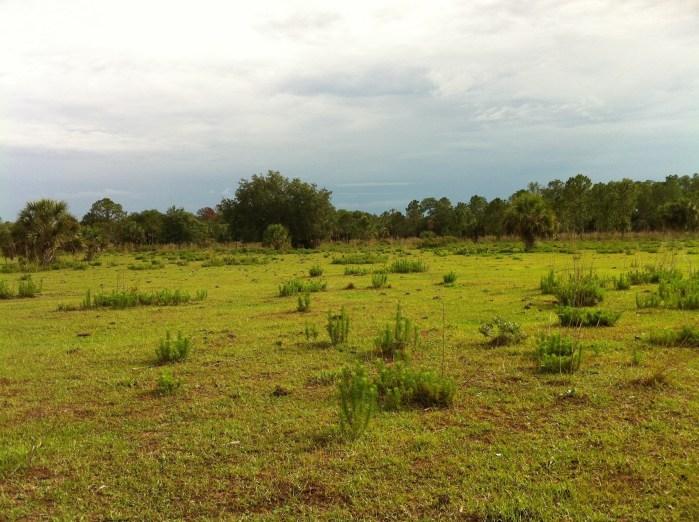 Caracara Prairie Preserve pasture