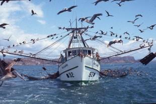 El proyecto busca prohibir la pesca de arrastre. (Imagen de Pretoma)