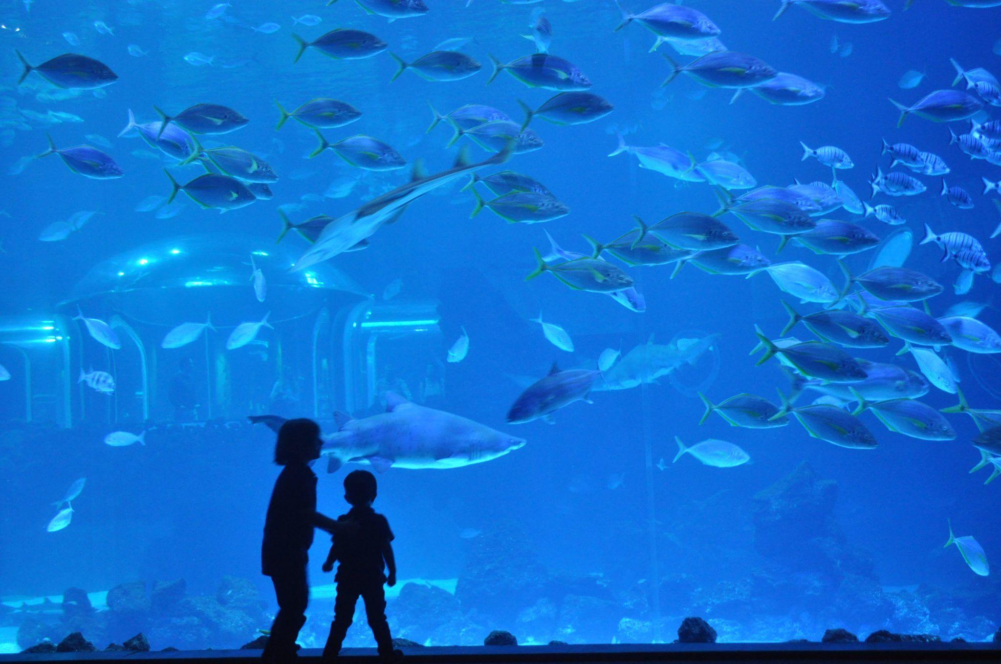 Visita Poema del Mar con niños