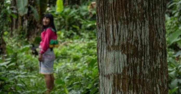 Comunidades Fortalecen Sus Estrategias para Conservar los Bosques Colombianos