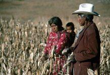 Relatora de la ONU sobre pueblos indígenas revisará cumplimiento de recomendaciones en México