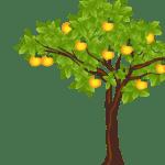 11. naranjas banner - Pwesa'n Piyaka