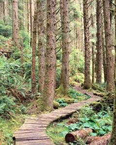 Boardwalk Through Lush Forest