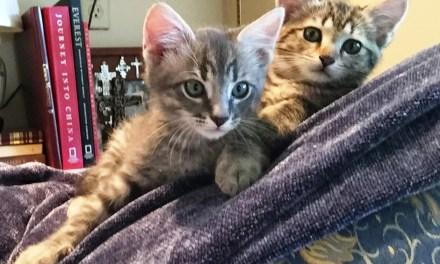 The Sweetness of Adoption