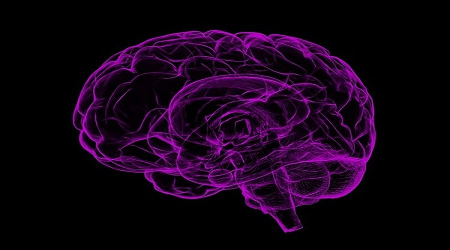 Investigating The Psychopathic Brain The Pathways To Violence