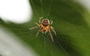 spider-918485_640