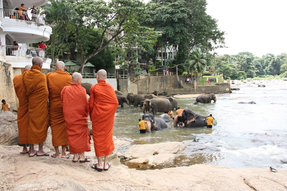 pinnawala elephant orphanage crimsonasia