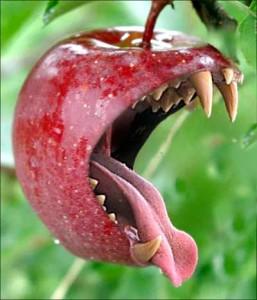 to jabłuszko kąsa