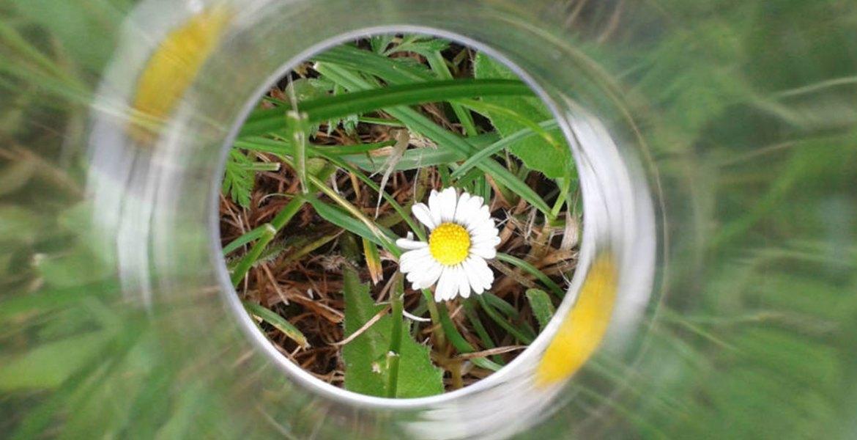 Le stupefacenti pillole di Re Mida - margherita fotografata attraverso un filtro fatto con cilindro di plastica trasparente