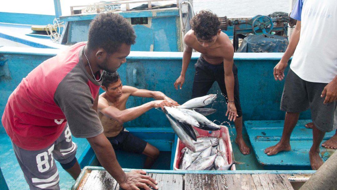 Provenance-Pesca