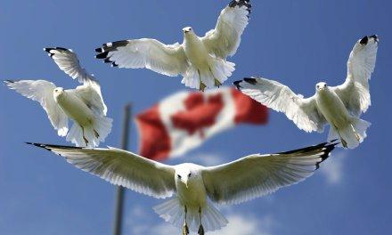 Banco Central de Canadá seguirá apostando por el desarrollo de aplicaciones blockchain