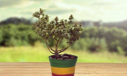 20 de Abril: Blockchain y criptomonedas ayudan a potenciar el comercio de cannabis