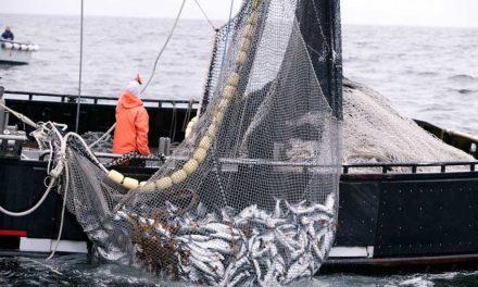 Intel rastreará suministro de peces desde la pesca hasta la mesa mediante blockchain