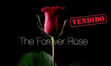 Forever Rose, la rosa grabada en la blockchain, fue vendida a 10 compradores por un millón de dólares