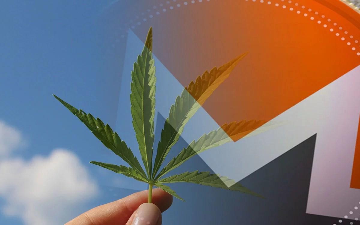 Especialista de eToro cree que podría aumentará el uso de monedas de privacidad para adquirir cannabis en Canadá