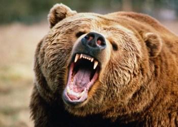bera, bear market