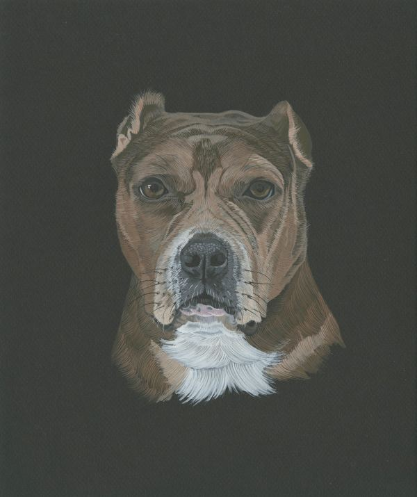 Carrie Walker Dog Portrait