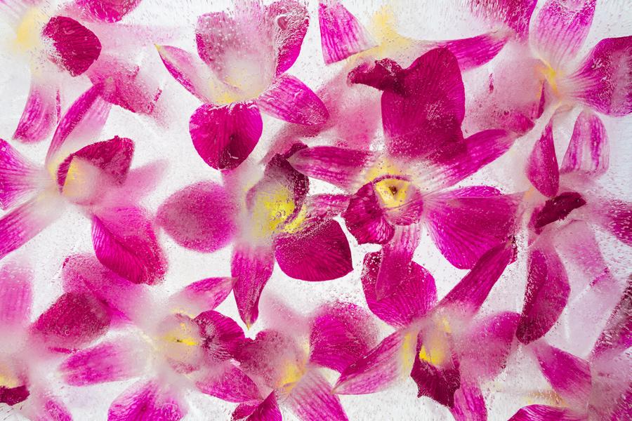 Bildergebnis für Blüte