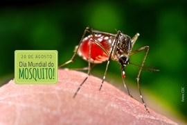 DIa Mundial do Mosquito