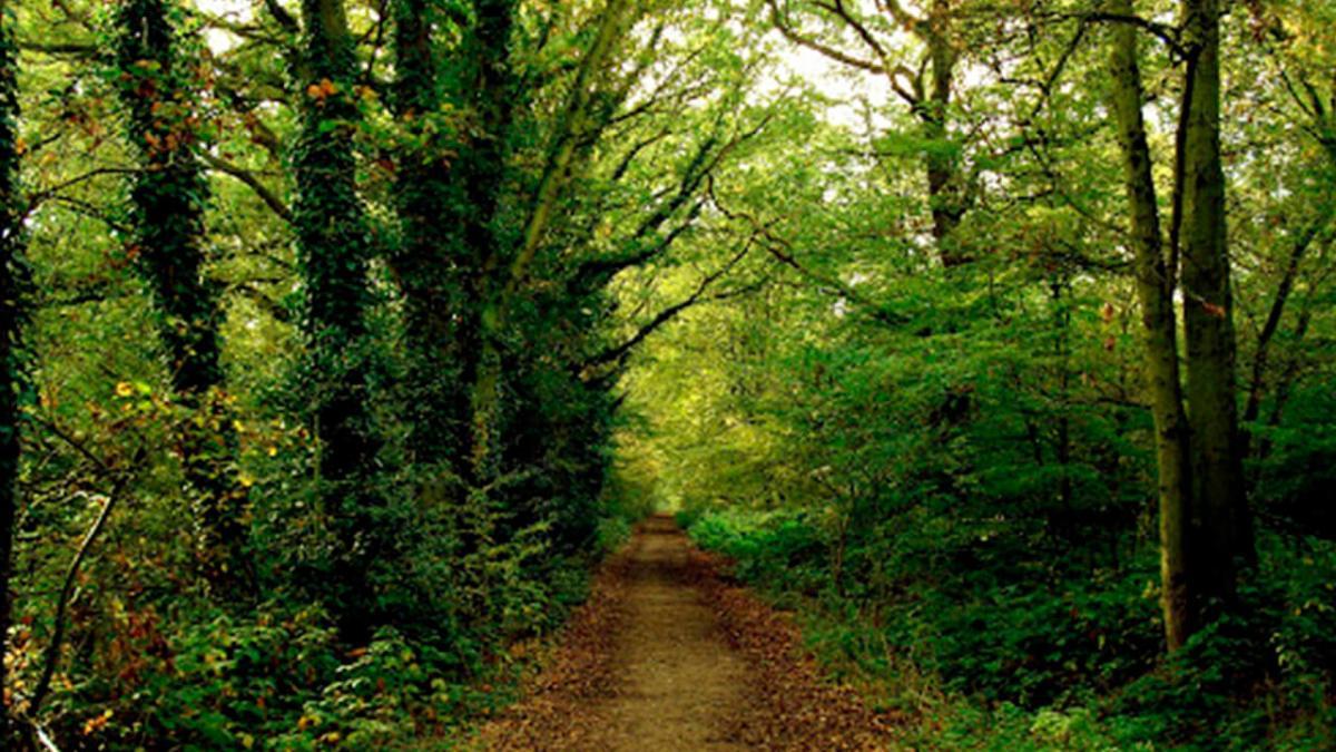 Reflexión: ¿Sabes tu dónde termina el camino que escogiste?