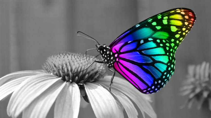 Rainbow butterfly effect