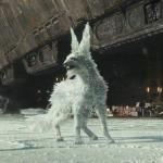 Vulptex - The Arctic fox