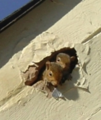 squirrels-in-hole-in-Gainesville