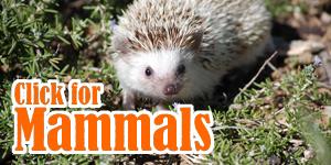 Click_for_Mammals