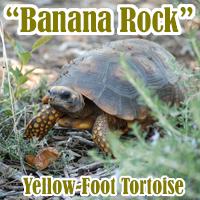 Banana_Rock_1
