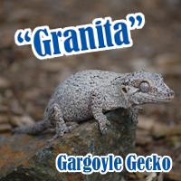 Gargoyle_Gecko