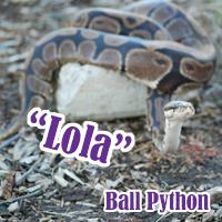 Lola_2