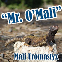 Mali_Uro