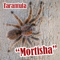 Mortisha