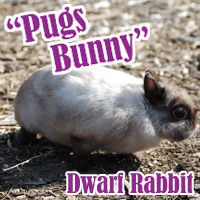 Pugs_Bunny