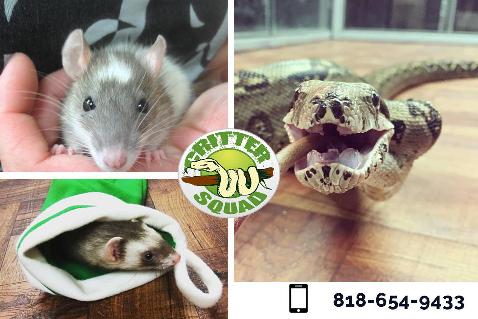 How to Get an Amazing Reptile Show